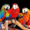 Попугай ара из бисера