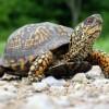 Как сделать черепаху из бисера