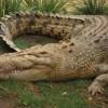 Как сделать крокодила из бисера