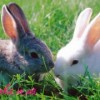 Как сделать кролика из бисера