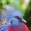 Венценосный голубь, синелобый ара и пчелоедка из бисера