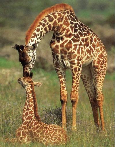 сделать жирафа из бисера.