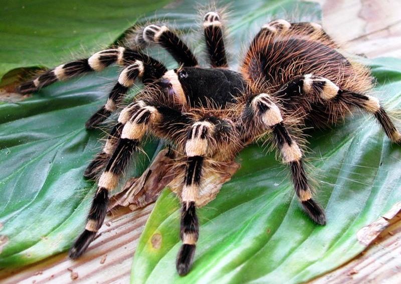 Как сделать паука из бисера