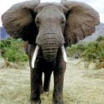 Слон из бисера