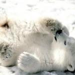 Медвежонок из бисера