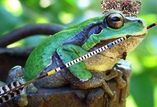 царевны-лягушки нам