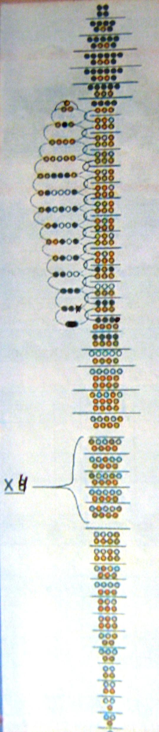 схема бисероплетения животных объемных