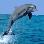 Дельфин из бисера
