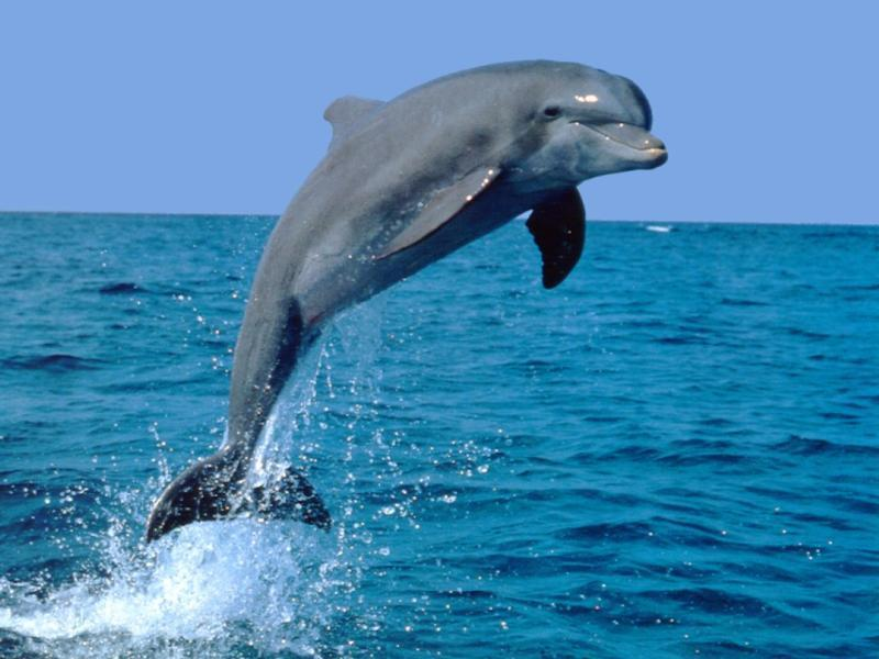 чтобы сделать дельфина из