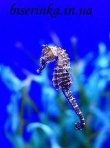 Морской конёк из бисера