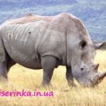 Объёмная фигурка носорога из бисера